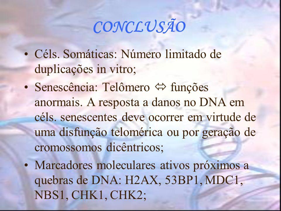 CONCLUSÃO Céls. Somáticas: Número limitado de duplicações in vitro; Senescência: Telômero funções anormais. A resposta a danos no DNA em céls. senesce