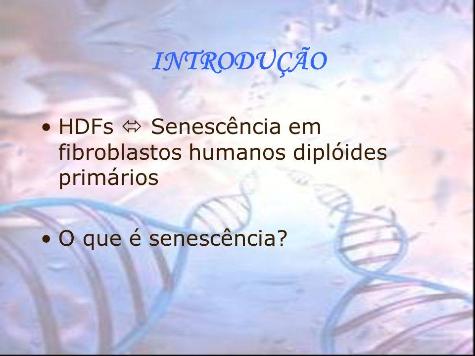 INTRODUÇÃO HDFs Senescência em fibroblastos humanos diplóides primários O que é senescência?