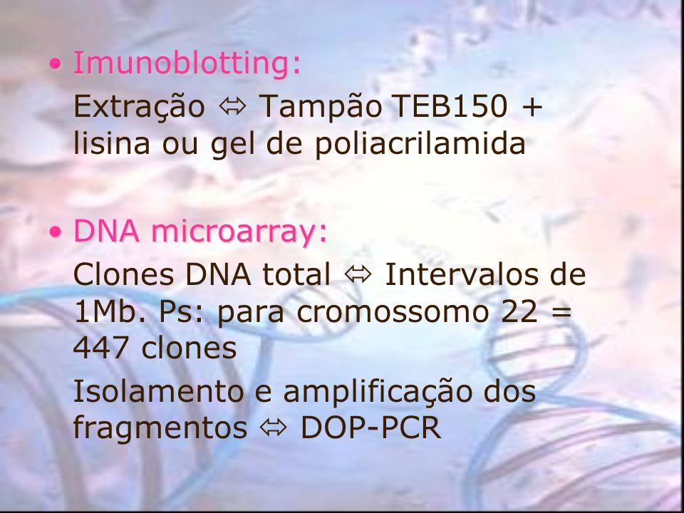 Imunoblotting:Imunoblotting: Extração Tampão TEB150 + lisina ou gel de poliacrilamida DNA microarray:DNA microarray: Clones DNA total Intervalos de 1M