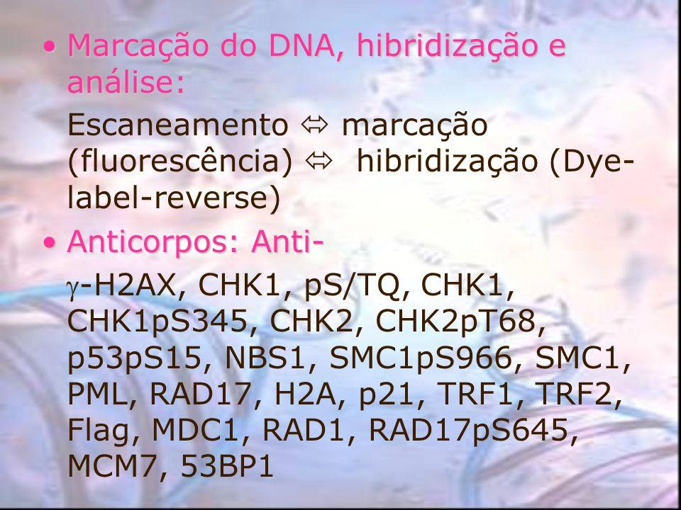 Marcação do DNA, hibridização e análise:Marcação do DNA, hibridização e análise: Escaneamento marcação (fluorescência) hibridização (Dye- label-revers
