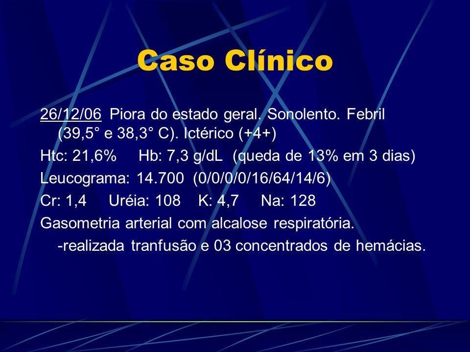 Caso Clínico 26/12/06 Piora do estado geral. Sonolento. Febril (39,5° e 38,3° C). Ictérico (+4+) Htc: 21,6% Hb: 7,3 g/dL (queda de 13% em 3 dias) Leuc