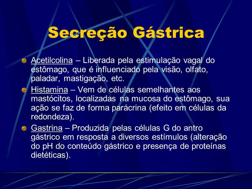 Secreção Gástrica Acetilcolina – Liberada pela estimulação vagal do estômago, que é influenciado pela visão, olfato, paladar, mastigação, etc. Histami