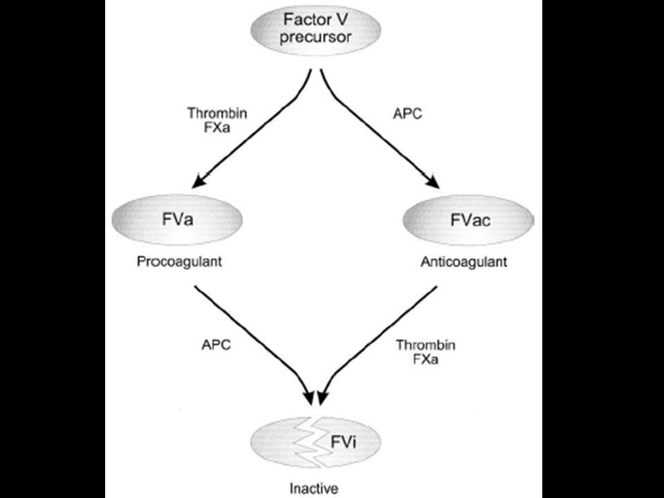 Trombose de Veia Mesentérica S/ irritação peritonial Heparina c/ ou s/ trombolítico Relaparotomia c/ ou s/ ressecção Trombectomia,Heparina Viável Laparotomia C/ irritação peritonial Ressecção Heparina WarfarinTrombolíticoNâo-Viável Brandt LJ et al.