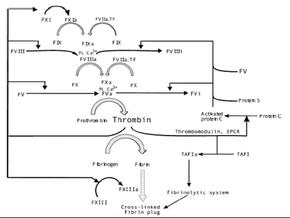 Fator V Leiden Isquemia Mesentérica Fator de risco Prevalência População Pacientes c/ trombose RR Deficiência de proteína C 0,2 – 0,4%3%6,5 Deficiência de proteína S 0,03 – 0,13%1 – 2%6,2 Fator V Leiden2 – 15%20%6,6 a Nicolaes GAF et al.