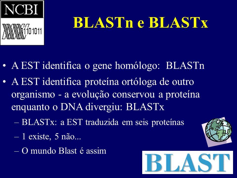 BLASTn e BLASTx A EST identifica o gene homólogo: BLASTn A EST identifica proteína ortóloga de outro organismo - a evolução conservou a proteína enqua