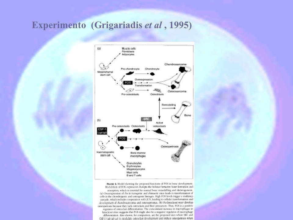 Experimento (Grigariadis et al, 1995)