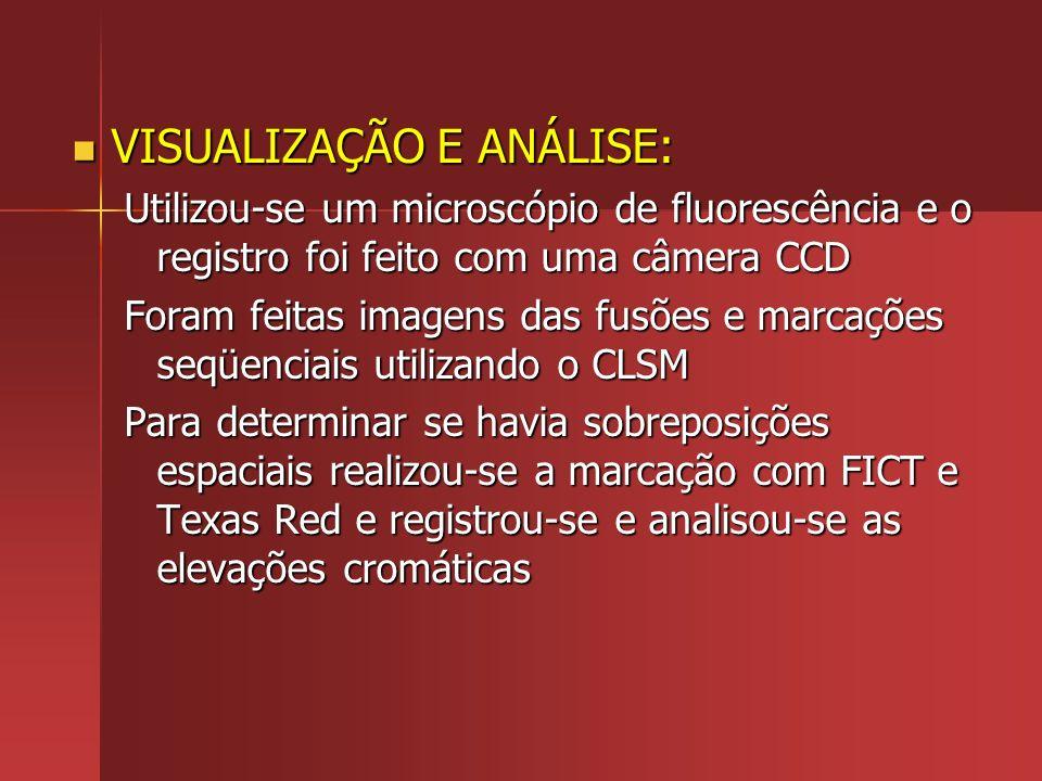VISUALIZAÇÃO E ANÁLISE: VISUALIZAÇÃO E ANÁLISE: Utilizou-se um microscópio de fluorescência e o registro foi feito com uma câmera CCD Foram feitas ima