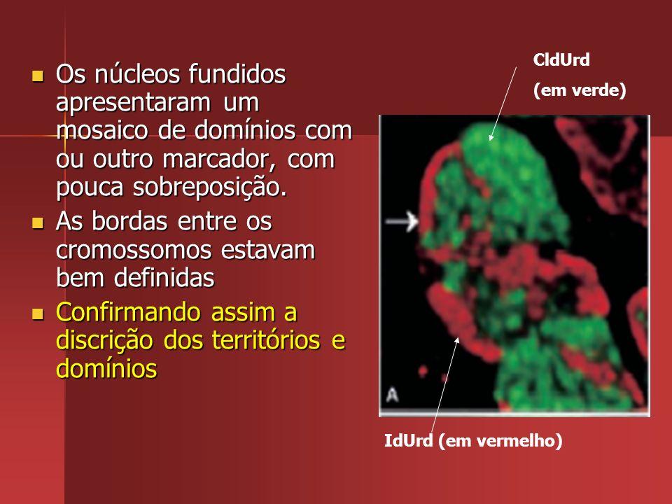 Os núcleos fundidos apresentaram um mosaico de domínios com ou outro marcador, com pouca sobreposição. Os núcleos fundidos apresentaram um mosaico de