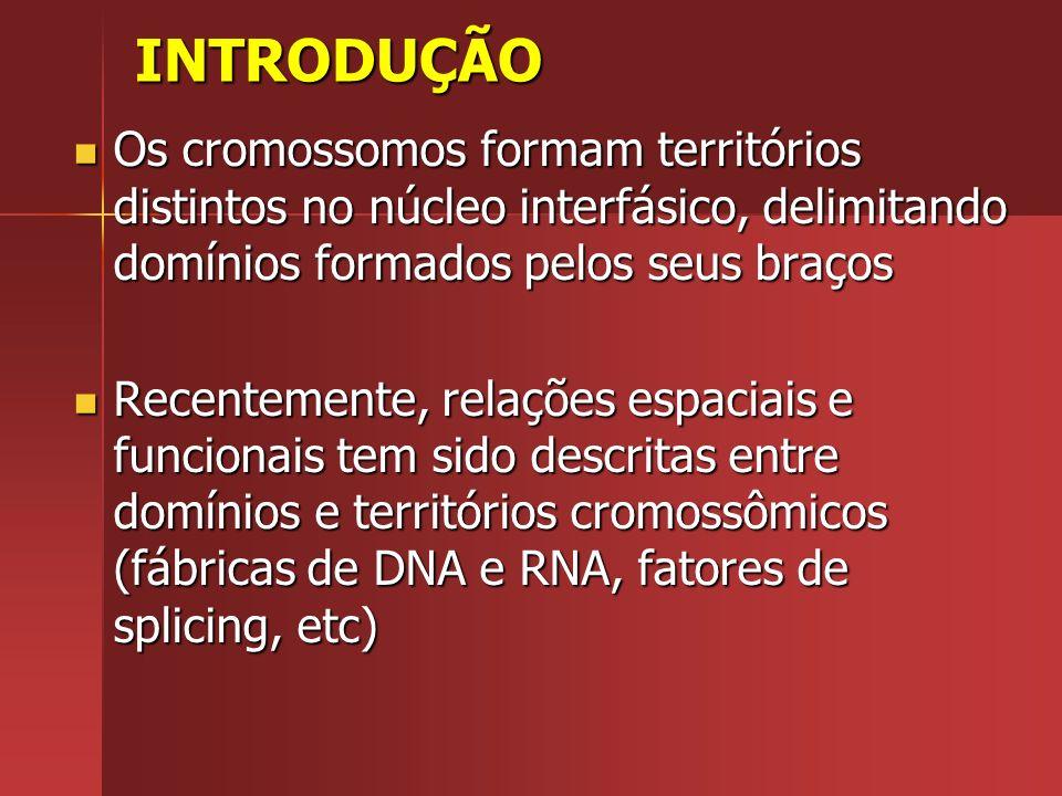 INTRODUÇÃO Os cromossomos formam territórios distintos no núcleo interfásico, delimitando domínios formados pelos seus braços Os cromossomos formam te