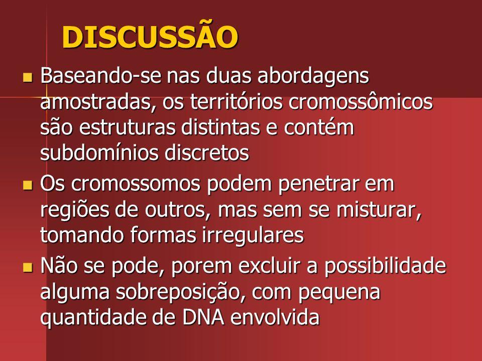 DISCUSSÃO Baseando-se nas duas abordagens amostradas, os territórios cromossômicos são estruturas distintas e contém subdomínios discretos Baseando-se