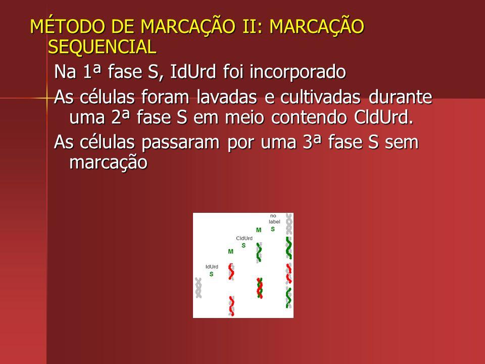MÉTODO DE MARCAÇÃO II: MARCAÇÃO SEQUENCIAL Na 1ª fase S, IdUrd foi incorporado As células foram lavadas e cultivadas durante uma 2ª fase S em meio con