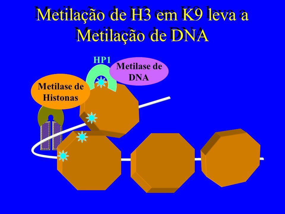 Desacetilação reprime a Cromatina Fatores de Transcrição (E2F) Co- Repressor (Rb) Histone De- ACetilase