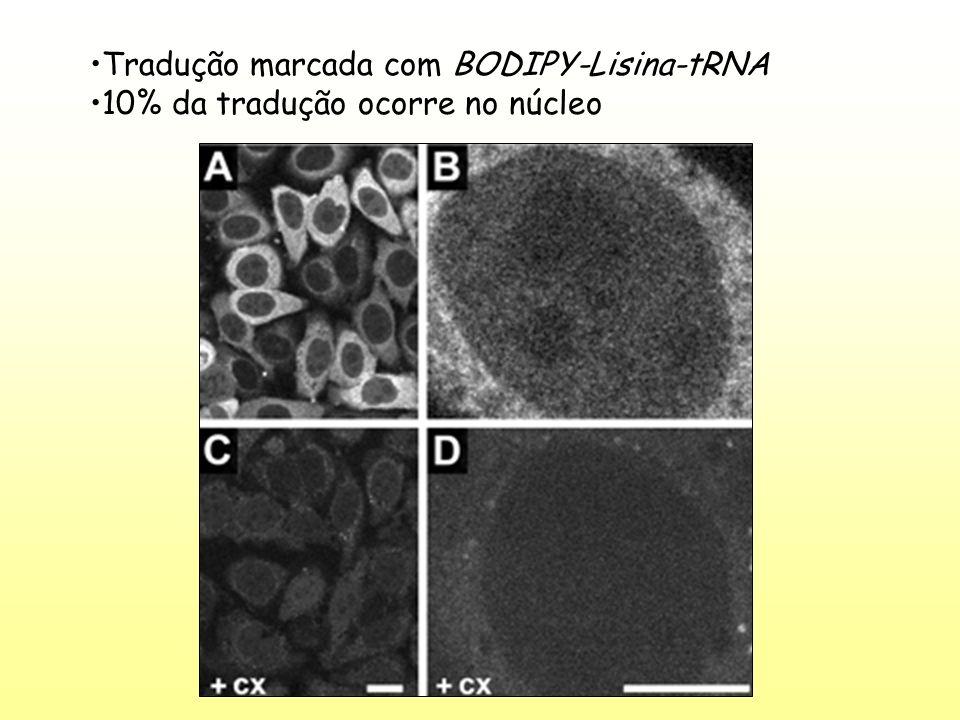 Desacetilase de Histonas Metilação de H3 em K9 leva a Metilação de DNA HP1 Metilase de DNA Metilase de Histonas