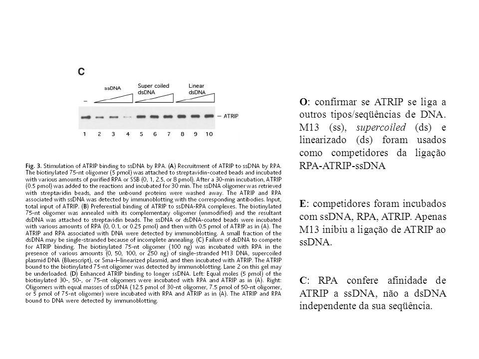 O: confirmar se ATRIP se liga a outros tipos/seqüências de DNA. M13 (ss), supercoiled (ds) e linearizado (ds) foram usados como competidores da ligaçã