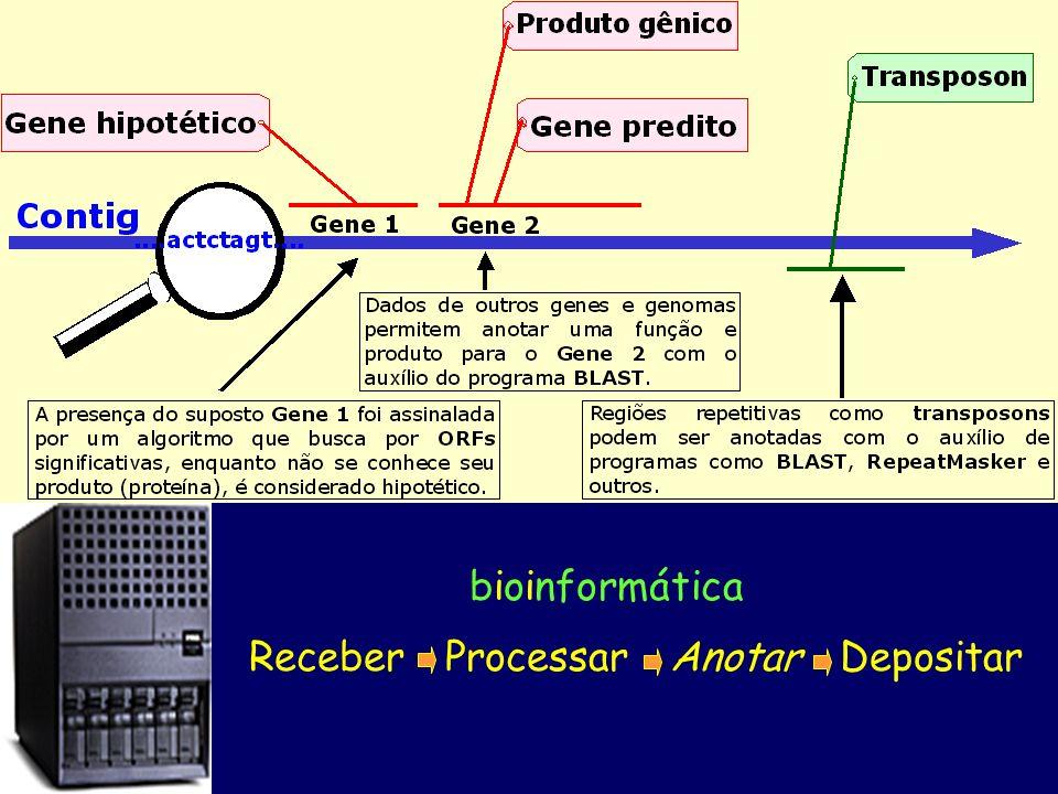 Receber Processar Anotar Depositar bioinformática