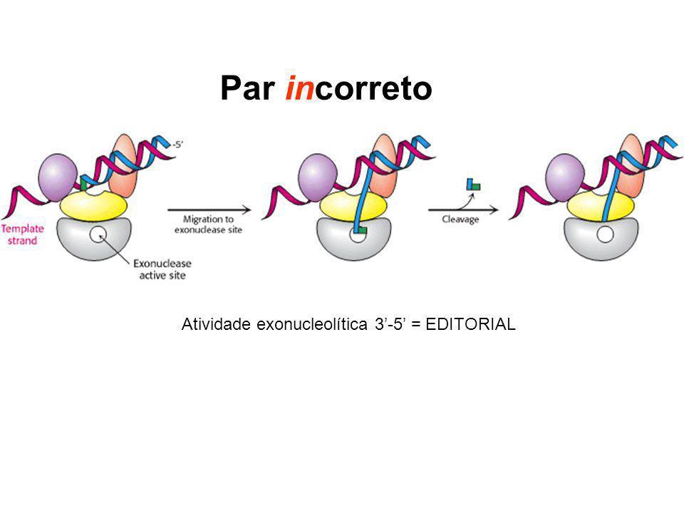 Par incorreto Atividade exonucleolítica 3-5 = EDITORIAL