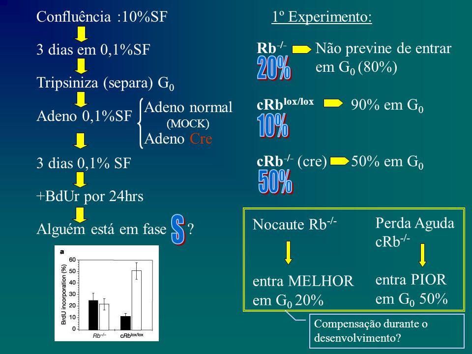 Confluência :10%SF 3 dias em 0,1%SF Tripsiniza (separa) G 0 Adeno 0,1%SF 3 dias 0,1% SF +BdUr por 24hrs Alguém está em fase .