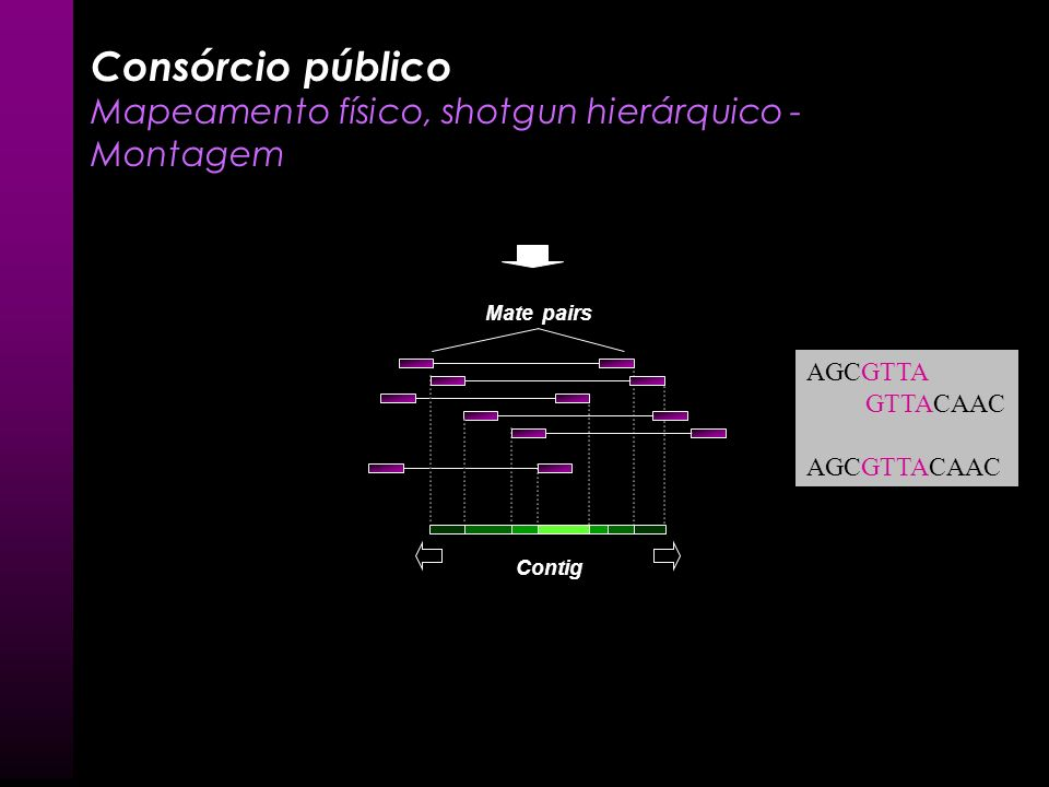 BAC Biblioteca Plasmídeo (inserto 10 kb) Seqüenciamento das extremidades do inserto Leituras ou reads Consórcio público Mapeamento físico, shotgun hie
