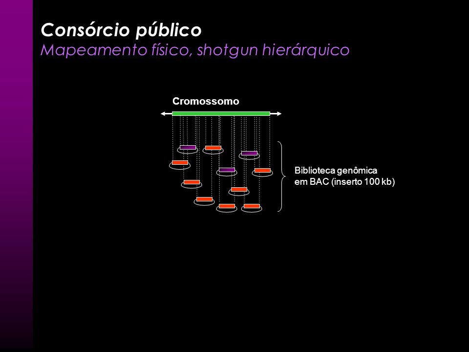 Contig Mate pairs AGCGTTA GTTACAAC AGCGTTACAAC Consórcio público Mapeamento físico, shotgun hierárquico - Montagem