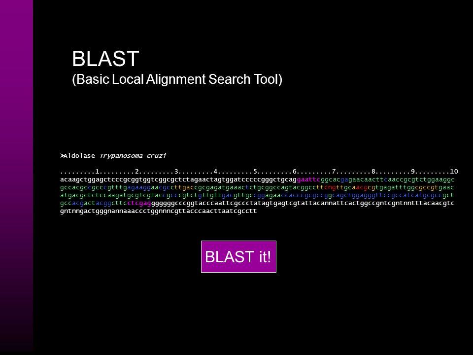 BLAST (Basic Local Alignment Search Tool) BLAST KEGG COG GenBank Nucleotídeos > SEQ1 atgggcacgagagttctcccggagac gctccgtgcgaagattatggagg ccgtcaatgtggtc