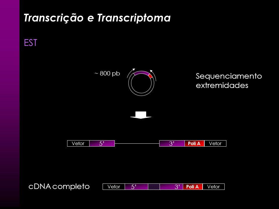 Transcrição e Transcriptoma EST Poli A cDNA Vetor + cDNA