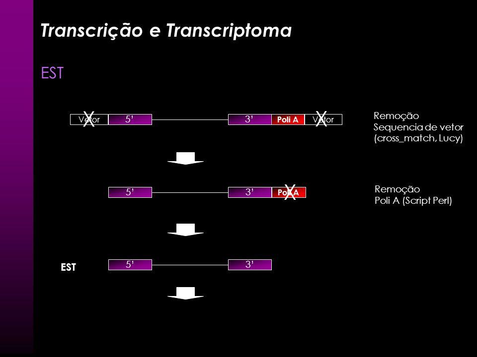 Transcrição e Transcriptoma EST Sequenciamento extremidades 5 Poli A 3 3 5 ~ 800 pb Vetor cDNA completo