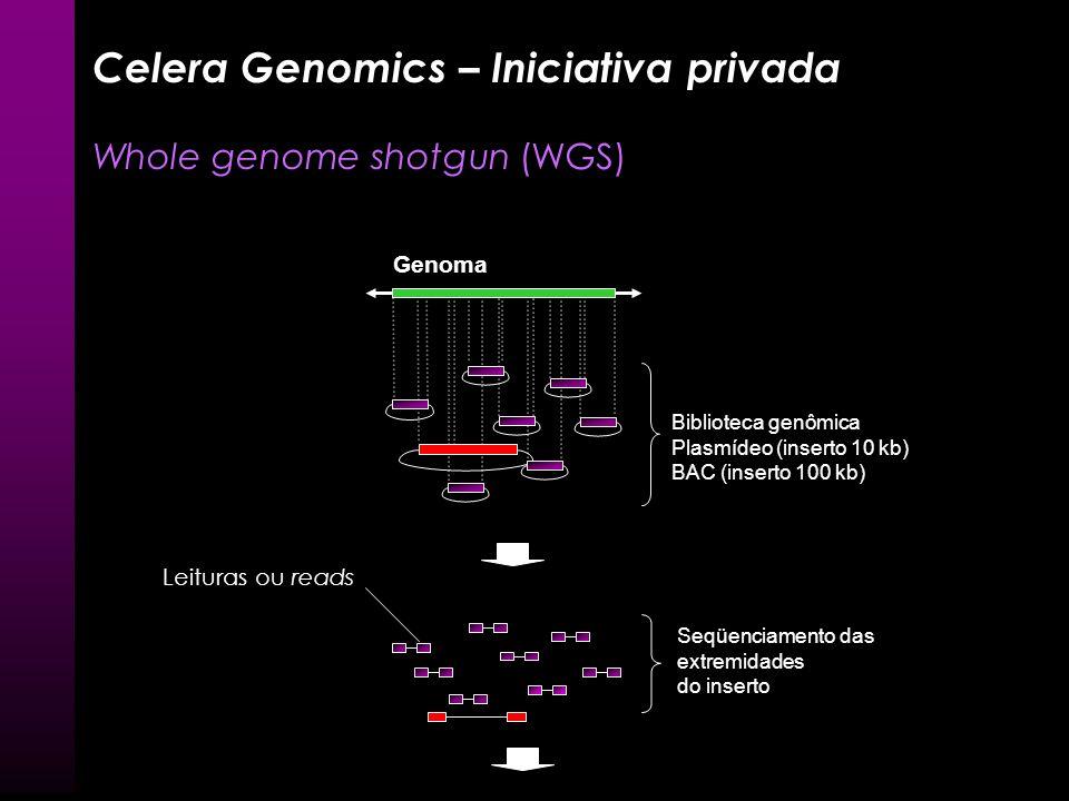 Seqüenciamento do Genoma Humano 2003: Consórcio público apresenta versão final do seqüenciamento do genoma humano –Comprimento total: 3 bilhões pb – 9