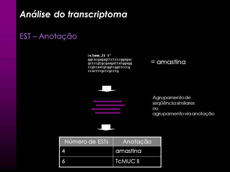 Análise do transcriptoma EST – Anotação BLASTX E BLASTN GenBank Nucleotídeos >clone_23 5 ggcacgagagttctcccggagac gctccgtgcgaagattatggagg ccgtcaatgtggt