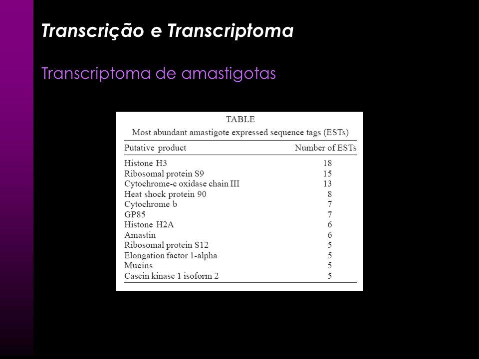 Análise do transcriptoma EST – Anotação Agrupamento de seqüência similares ou agrupamento via anotação = amastina >clone_23 5 ggcacgagagttctcccggagac