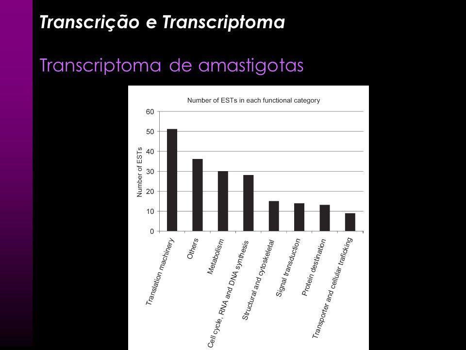 Transcrição e Transcriptoma Transcriptoma de amastigotas