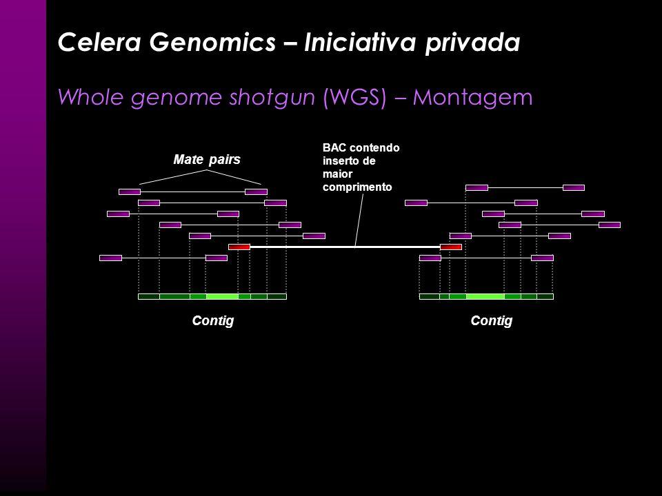 Contig Mate pairs Celera Genomics – Iniciativa privada Whole genome shotgun (WGS) – Montagem