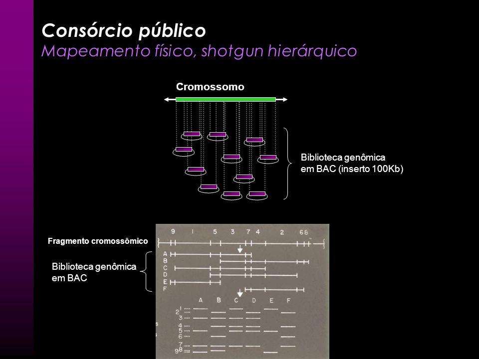 Contig Mate pairs Contig Scaffold Mate pairs Celera Genomics – Iniciativa privada Whole genome shotgun (WGS) – Montagem