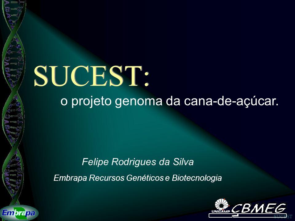 SUCEST SUCEST: Felipe Rodrigues da Silva Embrapa Recursos Genéticos e Biotecnologia o projeto genoma da cana-de-açúcar.
