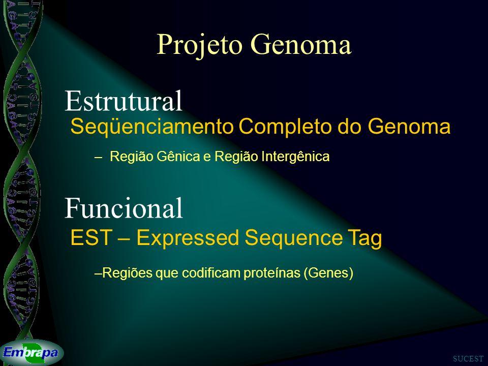 SUCEST Projeto Genoma Seqüenciamento Completo do Genoma –Região Gênica e Região Intergênica Estrutural Funcional EST – Expressed Sequence Tag –Regiões que codificam proteínas (Genes)