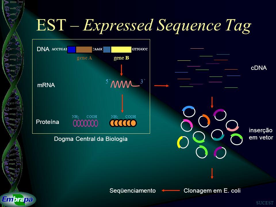 SUCEST EST – Expressed Sequence Tag Clonagem em E.