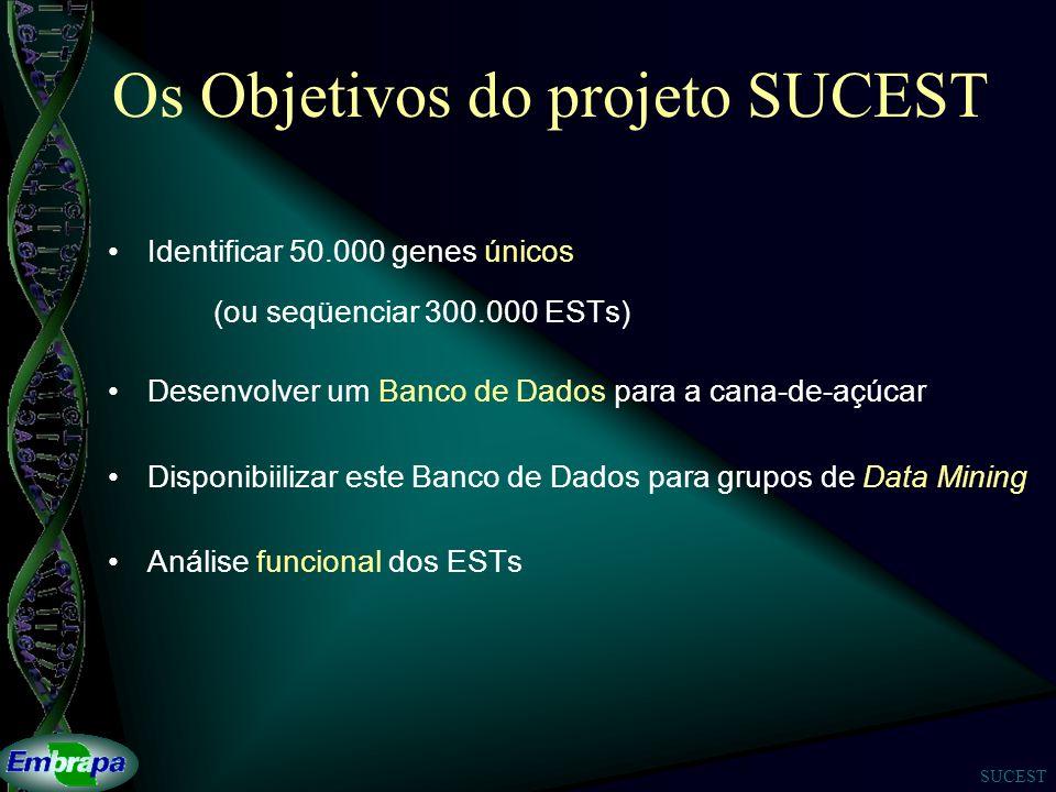 SUCEST Os Objetivos do projeto SUCEST Identificar 50.000 genes únicos (ou seqüenciar 300.000 ESTs) Desenvolver um Banco de Dados para a cana-de-açúcar Disponibiilizar este Banco de Dados para grupos de Data Mining Análise funcional dos ESTs