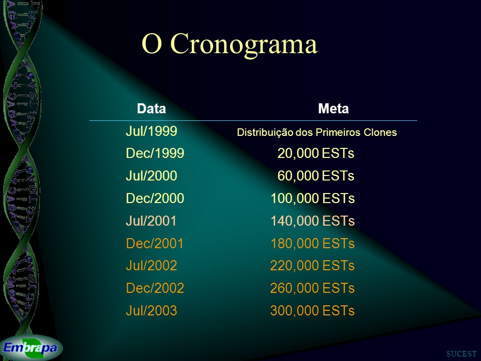 SUCEST O Cronograma Data Meta Jul/1999 Distribuição dos Primeiros Clones Dec/1999 20,000 ESTs Jul/2000 60,000 ESTs Dec/2000100,000 ESTs Jul/2001140,00
