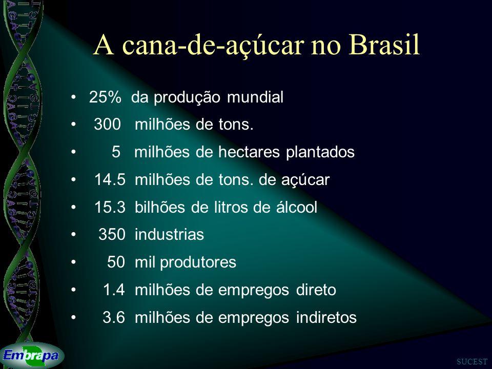 SUCEST A cana-de-açúcar no Brasil 25% da produção mundial 300 milhões de tons.