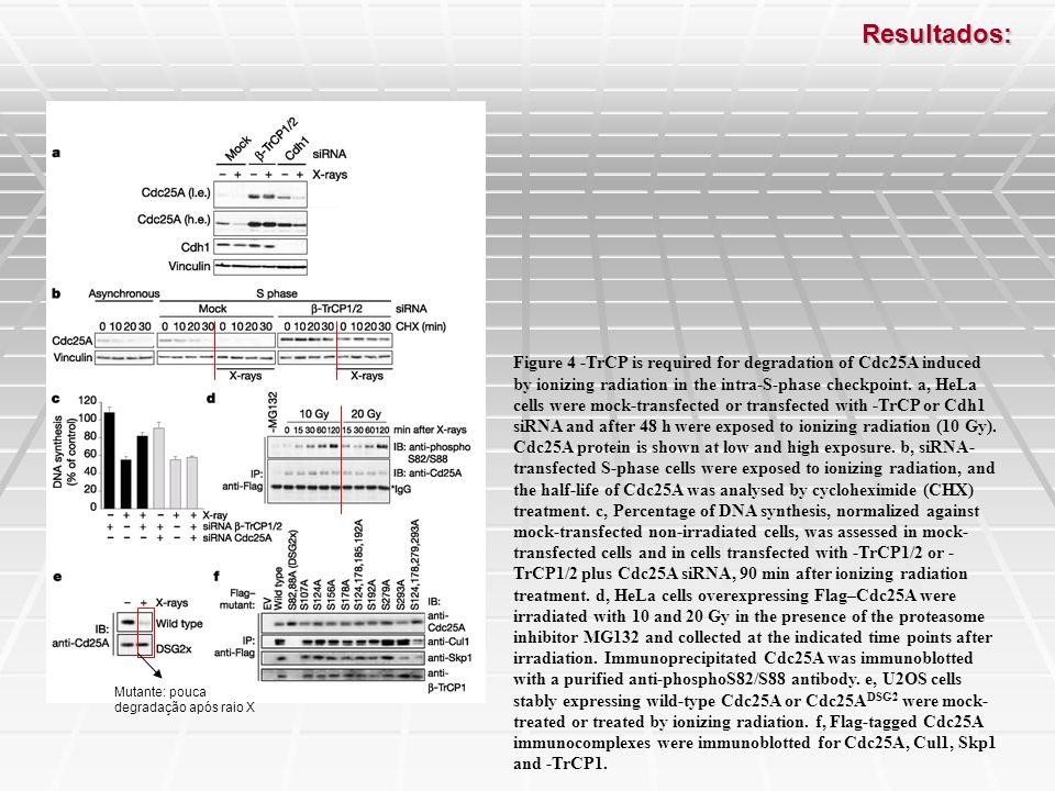 Conclusões: É requerido dois sites de fosforilação no Cdc25A para sua degradação por β-TrCP; Fosforilação nos resíduos de Serina pode estimular a degradação de Cdc25A por facilitar a interação com componentes do SCF ou por aumentar a habilidade do SCF para catalisar uma poliubiquitinação.