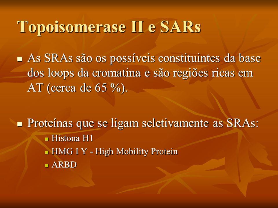 Topoisomerase II e SARs As SRAs são os possíveis constituintes da base dos loops da cromatina e são regiões ricas em AT (cerca de 65 %). As SRAs são o