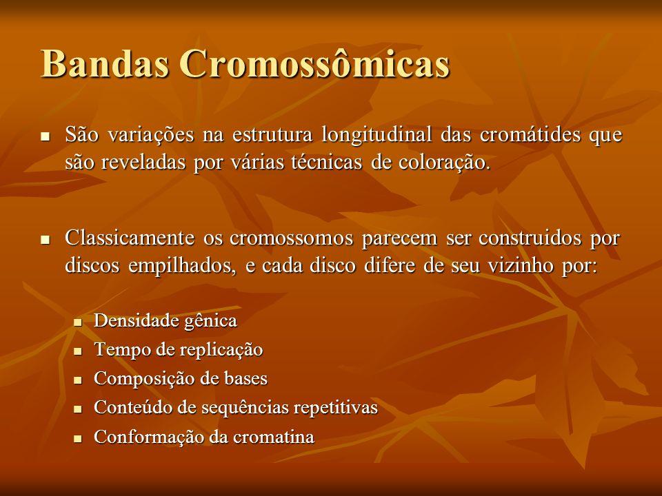 Bandas Cromossômicas São variações na estrutura longitudinal das cromátides que são reveladas por várias técnicas de coloração. São variações na estru
