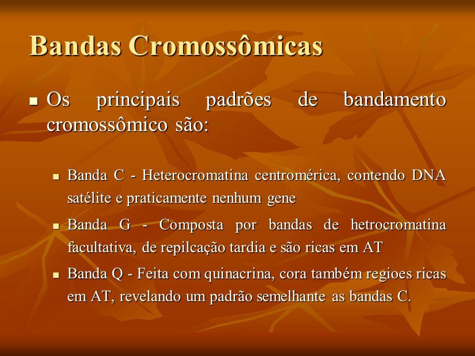 Bandas Cromossômicas Os principais padrões de bandamento cromossômico são: Os principais padrões de bandamento cromossômico são: Banda C - Heterocroma