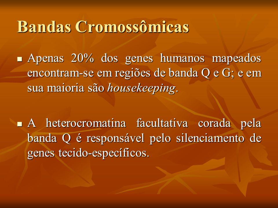 Bandas Cromossômicas Apenas 20% dos genes humanos mapeados encontram-se em regiões de banda Q e G; e em sua maioria são housekeeping. Apenas 20% dos g