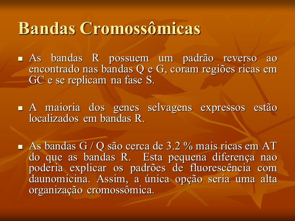 Bandas Cromossômicas As bandas R possuem um padrão reverso ao encontrado nas bandas Q e G, coram regiões ricas em GC e se replicam na fase S. As banda