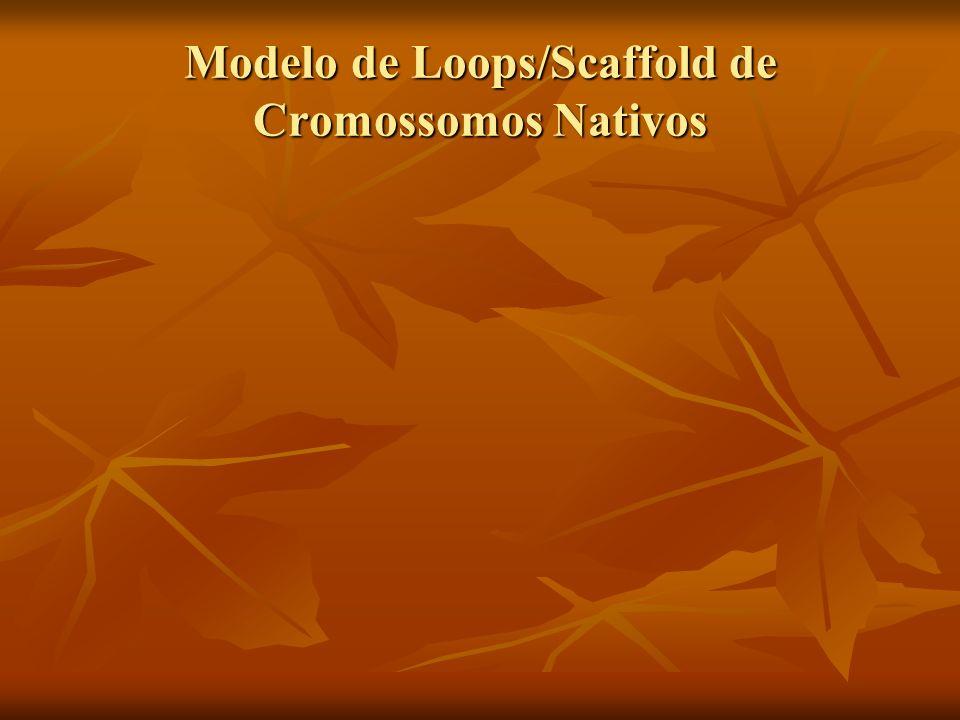 Modelo de Loops/Scaffold de Cromossomos Nativos
