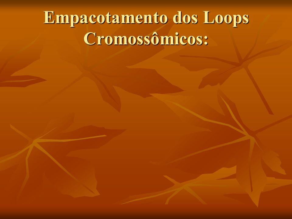 Empacotamento dos Loops Cromossômicos: