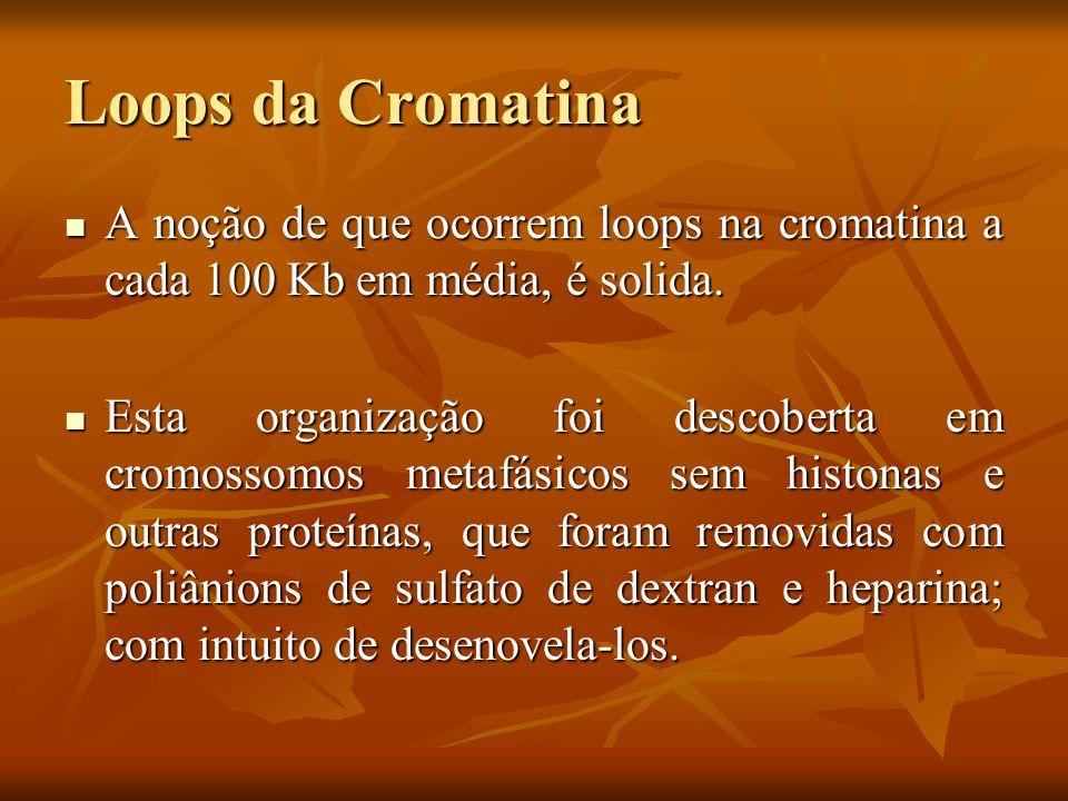 Loops da Cromatina Os princípios da organização em loops foram comprovados com técnicas de: Os princípios da organização em loops foram comprovados com técnicas de: Seções cromossômicas finas Seções cromossômicas finas Espalhamento dos cromossomos Espalhamento dos cromossomos Imunoflorescência com anticorpos contra Topoisomerase II Imunoflorescência com anticorpos contra Topoisomerase II