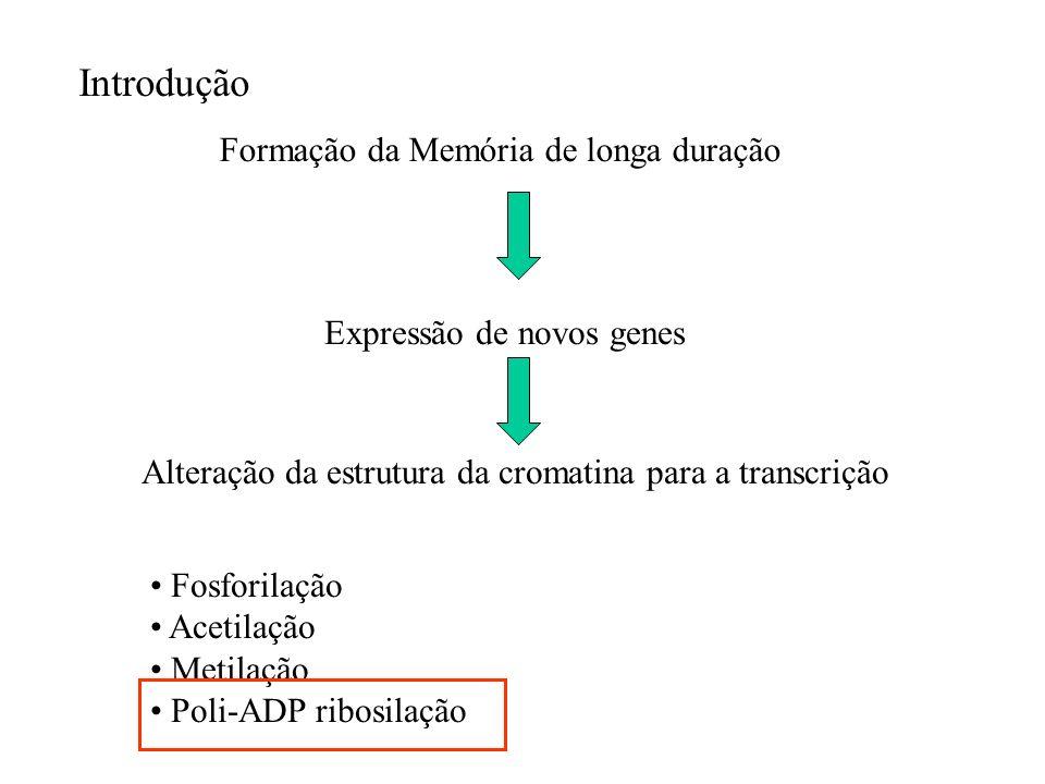 Poli-ADP ribosilação: Modificação de proteínas nucleares regulando a ligação no DNA.