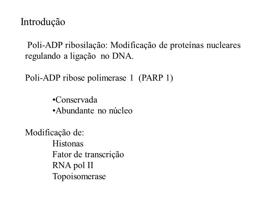 Poli-ADP ribosilação: Modificação de proteínas nucleares regulando a ligação no DNA. Poli-ADP ribose polimerase 1 (PARP 1) Conservada Abundante no núc