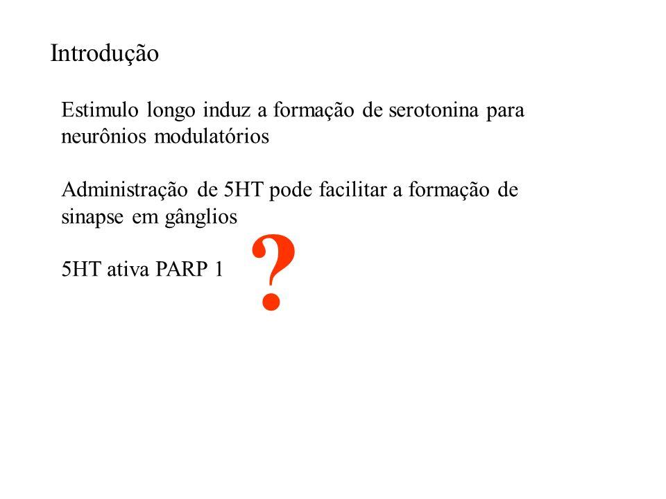 H1 foi poliADP-ribosilada (fica mais frouxa e permite transcrição local) no glanglio pleural- pedal como resultado do tratamento com 5-HT.
